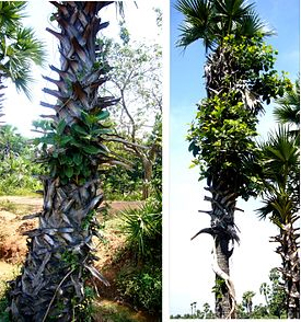 Grow these different trees for different star people